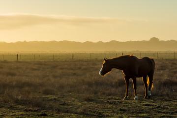 Horse near Arcata