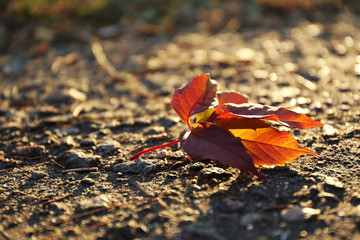 Beautiful autumn leaf on road