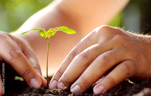 Papiers peints Arbre Male hand planting young tree over green background