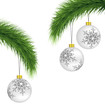 White Christmas balls on pine branches isolated on white