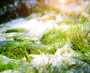 fresh green grass on snow
