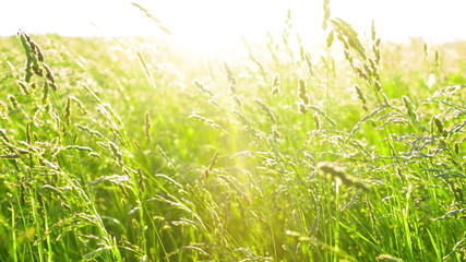 Grass with sunset
