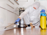 Pest controler works in the kitchen - 72399799