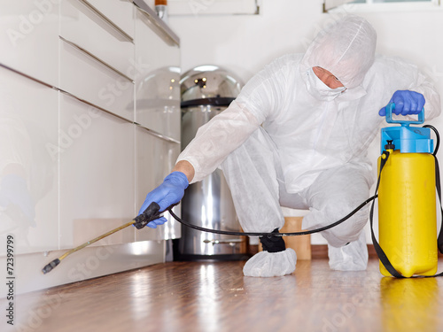 Pest controler works in the kitchen