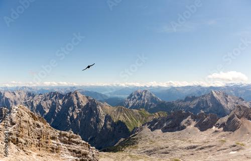 canvas print picture Alpendohle im Gebirge