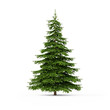 canvas print picture - Spruce on white