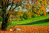 Autumn, fall landscape. Tree with colorful leaves