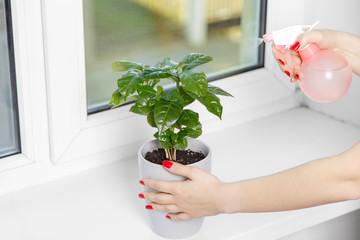 woman sprays a house plant