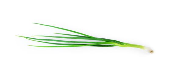 Fresh Green Onion isolated
