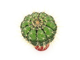 Cactus rendered isolated on white