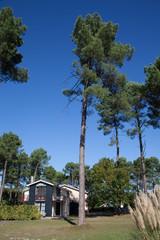 Chalet au milieu des pins