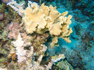 Shapes and colours of the Red Sea