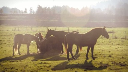 mare and her small herd