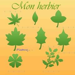 mon herbier (jeunesse, enfance)