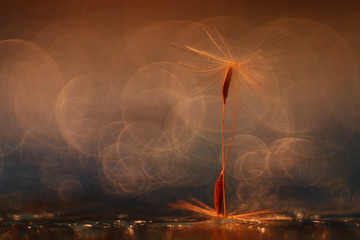 abstract blurred natural background orange dandelion seeds