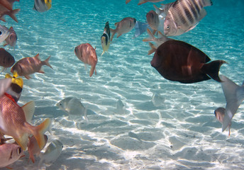 Tropical small fishes