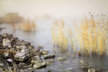 Foggy Autumn lake with reeds and stones