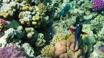 Marine life, fish, coral reef, sea, ocean, nature, Red Sea