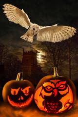 Halloween - Spooky Pumpkins - Owl