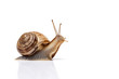 Leinwandbild Motiv snail on the white background