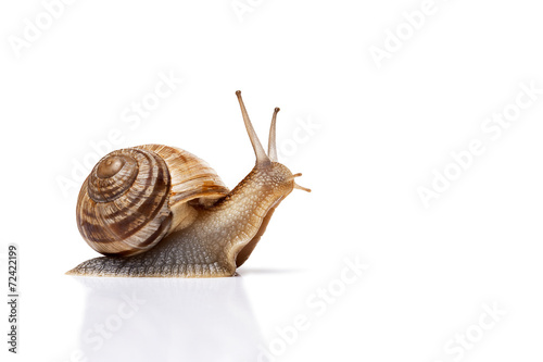 snail on the white background - 72422199