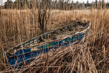 An abondoned old blue boat stuck in a canebrake.