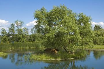 Island on a pond