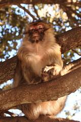 babbuino scimmia animale selvaggio