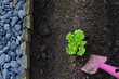 Small plant on vegetable garden