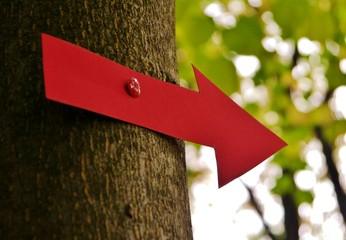 Roter Pfeil am Baum