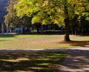 Baum wirft Schatten im Park