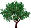 Obrazy na płótnie, fototapety, zdjęcia, fotoobrazy drukowane : Foliage tree