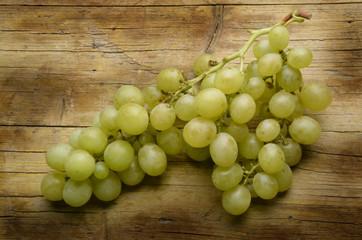 Vitis vinifera Weinreben Szőlő Winorośl Виноград Expo 2015