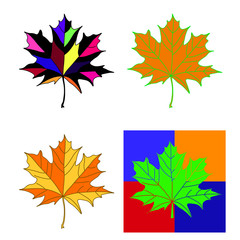 Collection of color autumn leaves.