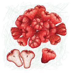 makopa fruit