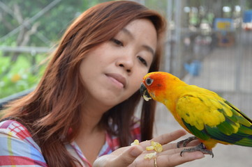 parrot feeding on girl hand