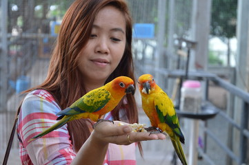 woman feeding parrots on her hand