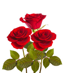 red roses on stems with leaves bunch