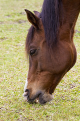 Horses mouth
