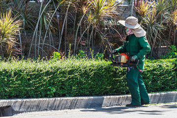 A Woman Trimming Hedge with Trimmer Machine