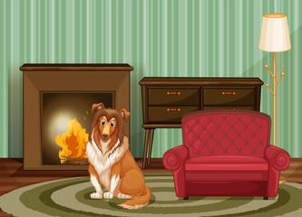 Dog and living room