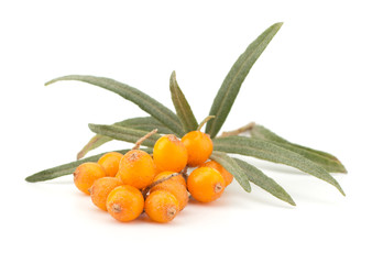 Fresh sea buckthorn isolated on the white background