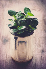 A potted plants in tin cans