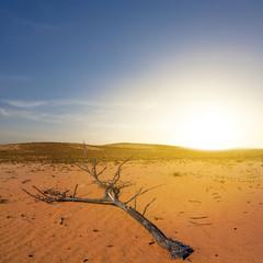 dry branch among a sand desert