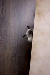 Маленький котенок выглядывает из-за мольберта