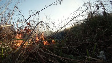 sun shines through the smoke and fire, burning dry grass