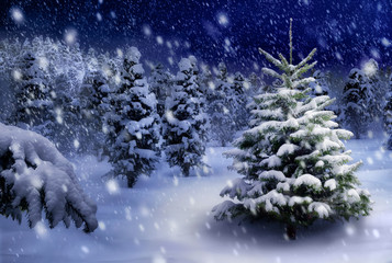 Tannenbaum in verschneiter .Nacht