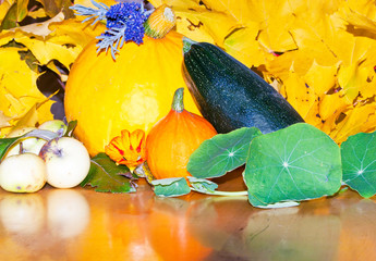 harvested fruits and vegetables - Thanksgiving