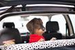 Cane bassotto  in auto