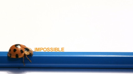 ladybug, beatle push The word impossible change to Possible.